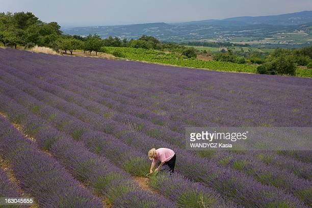 A French Passion Les reporters de Paris Match ont sillonné la France pendant un an à la rencontre des agriculteurs modernes Raymond AGNEL 78 ans dans...