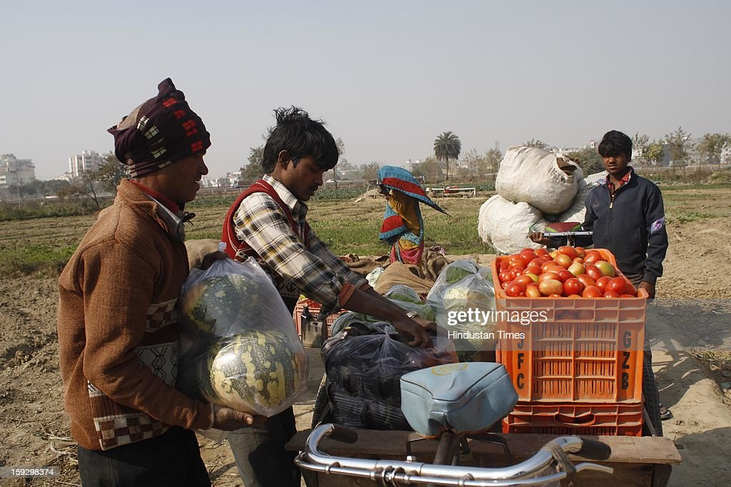 Farmers arrange vegetables on their three wheeler carts to sell them in a market after collecting them from a vegetable farm on January 10, 2013 in Noida, India. These farmers took the portion of land for contract from the owner & pay them Rupees 4000 (73.30 USD) for One Bhiga (14400 square feet) per year. They grow different vegetables in their contracted fields & make their living by selling them to the distributors.