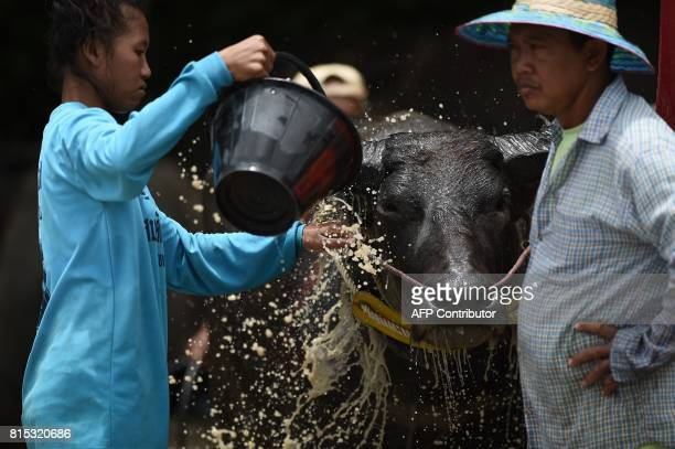 Farmers bath a racing buffalo in between racing in a rice paddy field during the annual rice planting festival in Chonburi on July 16 2017 Languidly...