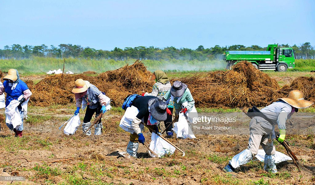Farmers clean up debris at tsumami stricken field on September 10, 2012 in Watari, Miyagi, Japan. 18 months on, still 2,814 people are missing and 340,000 people are forced to live at temporary housing.