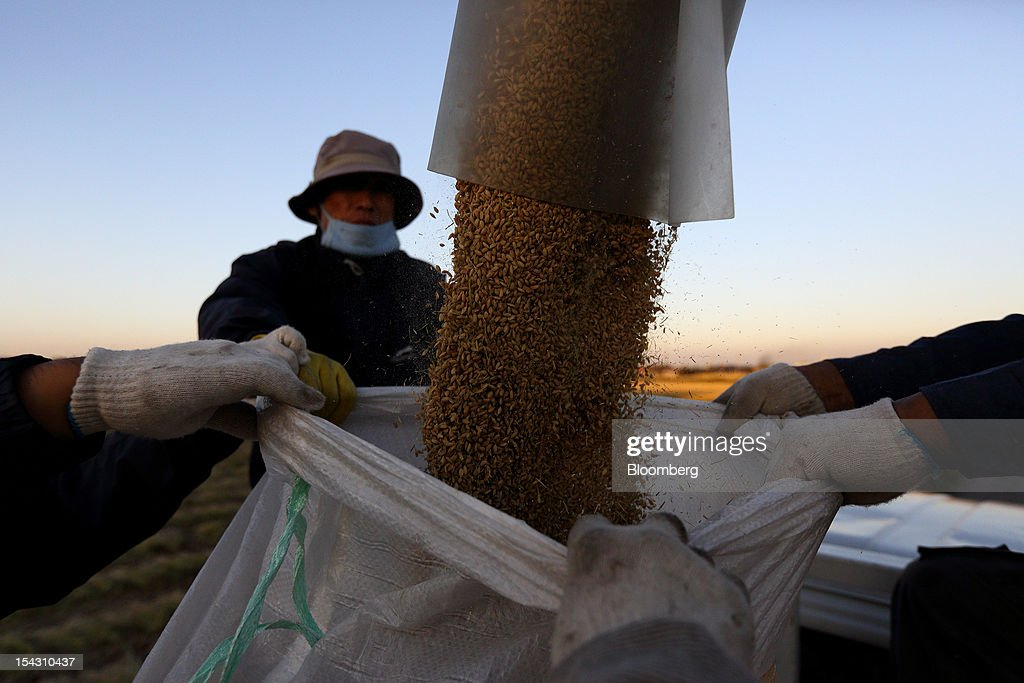 Farmers hold a sack as a combine harvester pours rice into it during harvest in a paddy field in Asan, South Korea, on Thursday, Oct. 11, 2012. South Korea will boost production of rough rice to 5.801 million metric tons in the year that starts Nov. 1, compared with an estimated 5.616 million a year earlier, the U.S. Department of Agriculture's Foreign Agricultural Service said on Aug. 2 in a report posted on its website. Photographer: SeongJoon Cho/Bloomberg via Getty Images