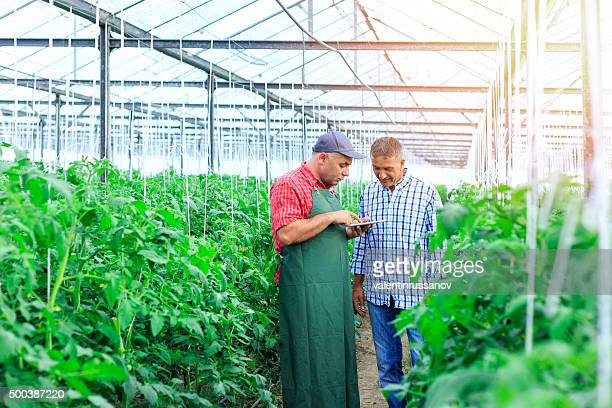 Farmers in a greenhouse looking at digital tablet
