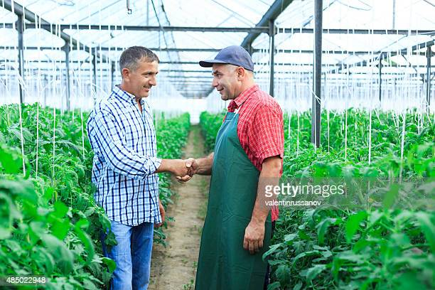 Farmers in a greenhouse shaking hands.