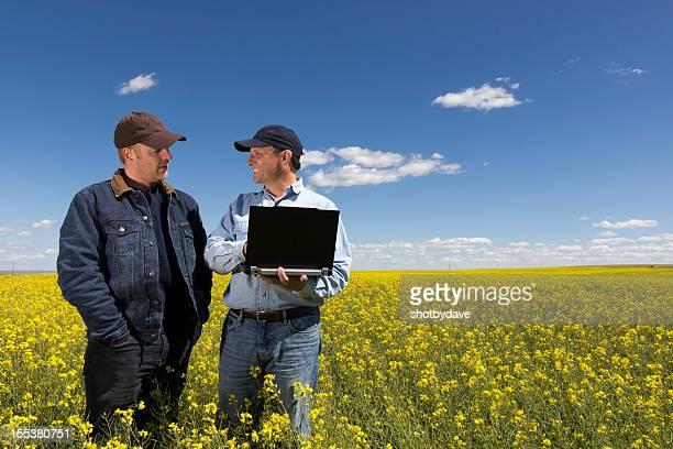 Agricultores de Canola