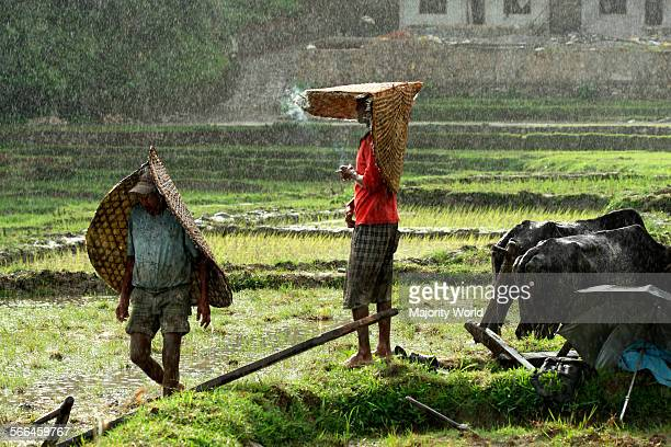 Farmers in the fields in monsoon rain around Phewa Lake in Pokhara Nepal June 28 2010