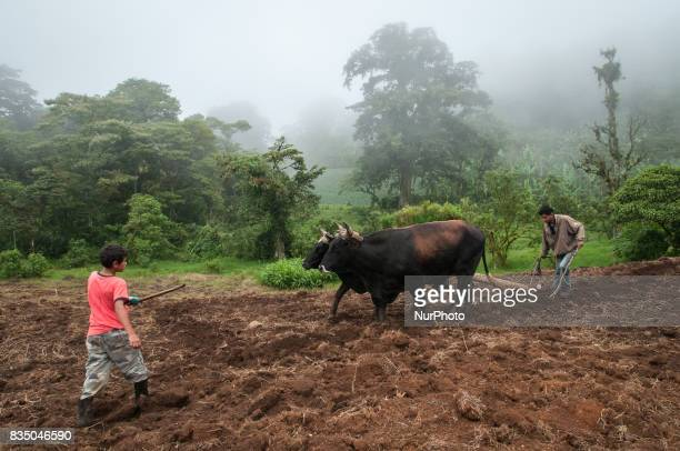 Farmers in the Miraflor Natural Reserve in northern Nicaragua use oxen to prepare a field for the next planting season Photo taken 18 September 2011