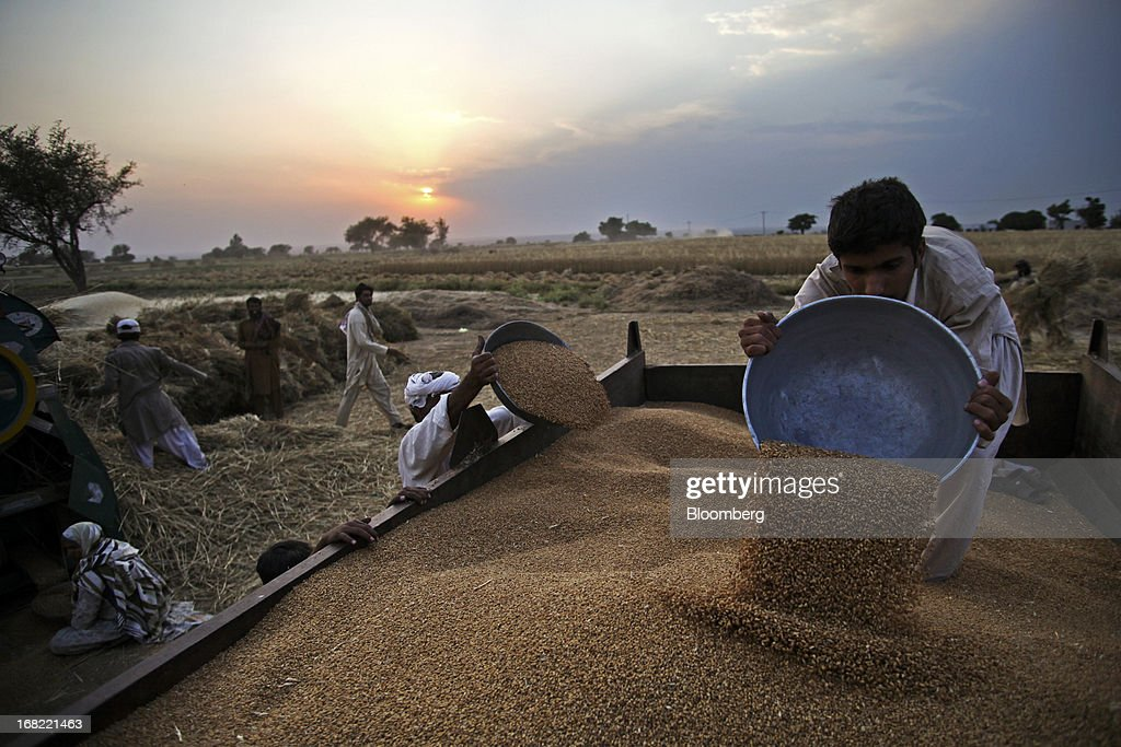 Farmers load newly harvested wheat from bowls onto a tractor trolley in the Chakwal district of Punjab province, Pakistan, on Saturday, May 4, 2013. Pakistan wheat output to increase this year, the U.S Department of Agriculture's Foreign Agricultural Service said in a report posted today on its website on April 4. Photographer: Asad Zaidi/Bloomberg via Getty Images
