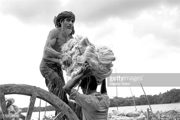 Farmers loading washed jute the golden fiber of Bangladesh on a cart in Narail Jessore Bangladesh Eighty percent of the world's high quality jute...