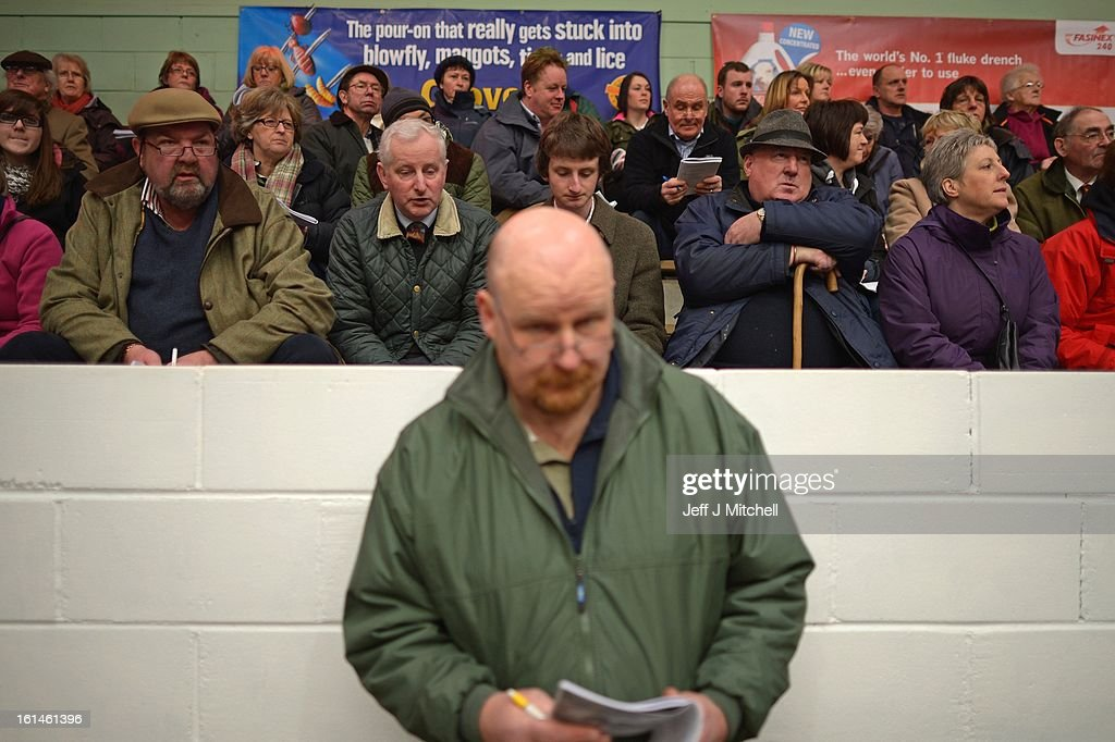 Farmers look on as cattle are paraded in the auction ring during the 122nd Highland Cattle Society spring sale at Oban Livestock centre on February 11, 2013 in Oban, Scotland. The show and sale is held over two days and is open to all highland breed enthusiasts, attracting many buyers from across Europe and North America.