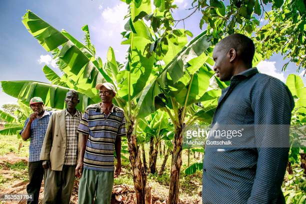 Farmers next to a banana plant on a field of a farm on which plants grow with the support of the irrigation system of local farming cooperative...