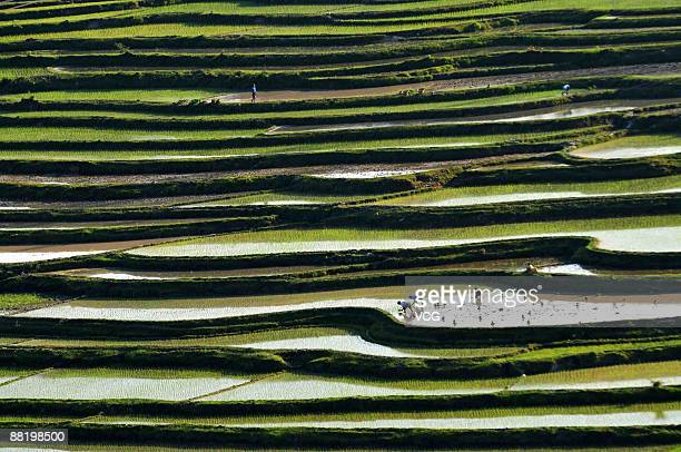 Farmers of the Miao ethnic group work on the rice terraces on June 3 2009 in Guiyang of Guizhou Province China