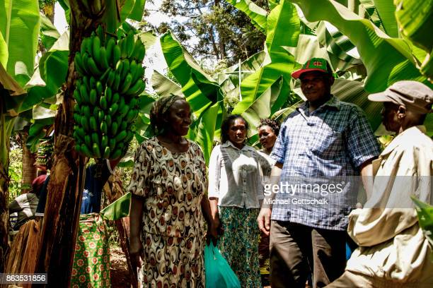 Farmers on the field of a farm on which plants grow with the support of the irrigation system of local farming cooperative Mitooini The field of a...