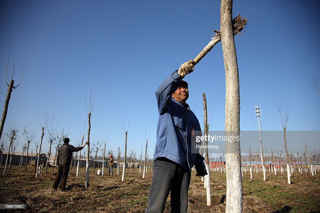 Farmers paint poplar trees in Pinggu, on the outskirts of Beijing, China, on Saturday, Nov. 17, 2012. China's gross domestic product slowed to 7.4 percent in the July-September period from a year earlier, the weakest in three years. Photographer: Tomohiro Ohsumi/Bloomberg via Getty Images