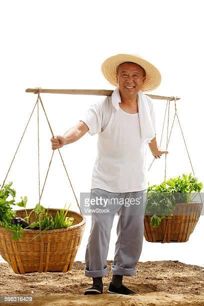 Farmers picking vegetables