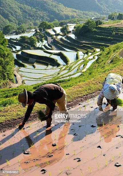 Farmers plant rice at Nakayama rice terrace on May 14 2015 in Shodoshima Kagawa Japan