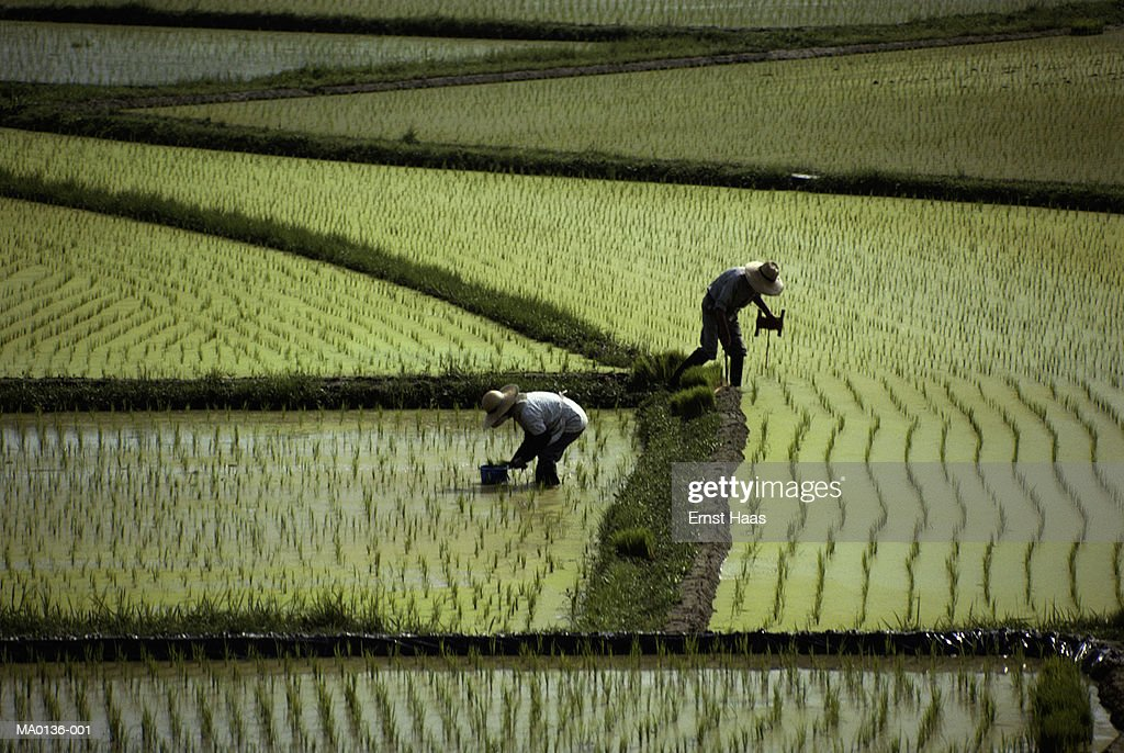 Near Nara, Japan : Stock Photo