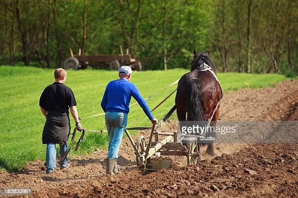 Farmers plowed land horse