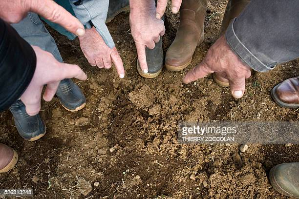 Farmers point out a molehill made by water vole a small rodent in a field in Allanche on April 27 2016 / AFP / Thierry Zoccolan