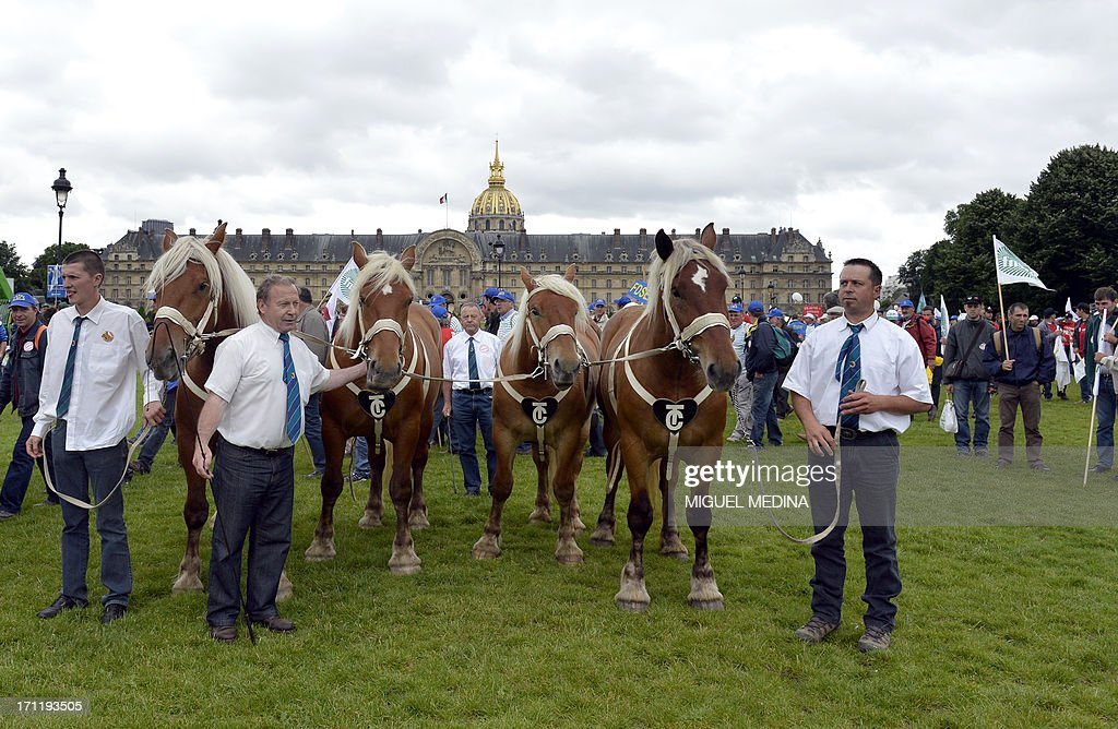 Farmers pose on the Invalides esplanade with their Comtois plow horses in Paris on June 23, 2013. The two main farmers unions organized a rally a rally with farmers from all over France and their cattle, to talk about the reality of their work and the difficulties encountered by farmers.