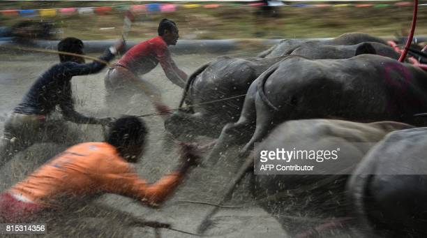 Farmers ride on the back of wooden ploughs tied to pairs of racing buffaloes during the annual rice planting festival in Chonburi on July 16 2017...