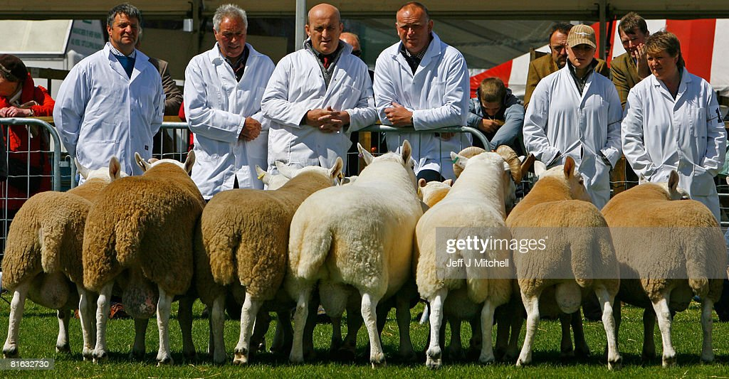 Farmers show their sheep at the Royal Highland Show June 19, 2008 in Edinburgh, Scotland. The event is the biggest in the Scottish farming calendar with it expecting over 100,000 visitors over the next four day's.
