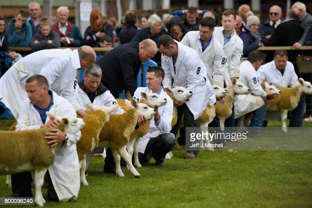 Farmers show their sheep at the Royal Highland show on June 23 2017 in Edinburgh ScotlandThe Royal Highland Show is Scotland's annual farming and...