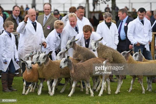 Farmers show their sheep at the Royal Highland show on June 23 2017 in Edinburgh ScotlandThe Royal Highland Show is Scotland's annual farming and...