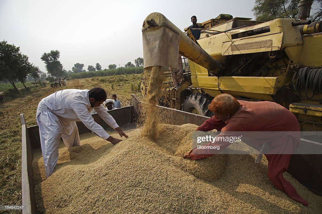 Farmers spread newly-harvested rice in a tractor trolley in the Chiniot district of Punjab province, Pakistan, on Saturday, Oct. 13, 2012. Rice exports from Pakistan, the fourth-largest shipper, are set to rebound from November with the new harvest after a rally in domestic prices and cheaper supplies from India cut shipments, a traders' group said. Photographer: Asad Zaidi/Bloomberg via Getty Images