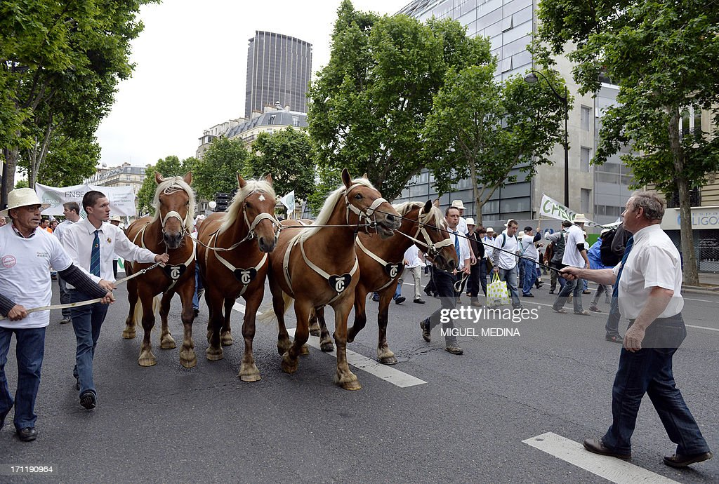 Farmers take part in a rally with their plow Comtois horses in Paris on June 23, 2013. The French agricultural trade union, FNSEA, organized a rally with farmers from all over France and their cattle, to talk about the reality of their work and the difficulties encountered by farmers. At background, the Maine-Montparnasse Tower.