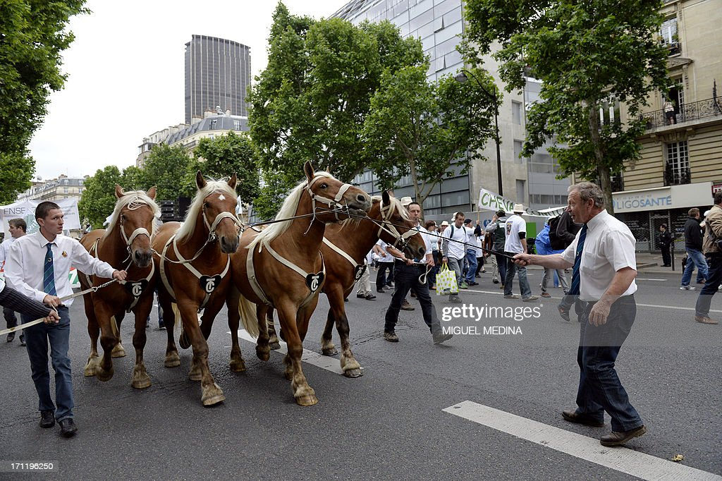 Farmers take part in a rally with their plow Comtois horses in Paris on June 23, 2013. The French agricultural trade union, FNSEA, organized a rally with farmers from all over France and their cattle, to talk about the reality of their work and the difficulties encountered by farmers. At background, the Maine-Montparnasse Tower. AFP PHOTO / MIGUEL MEDINA