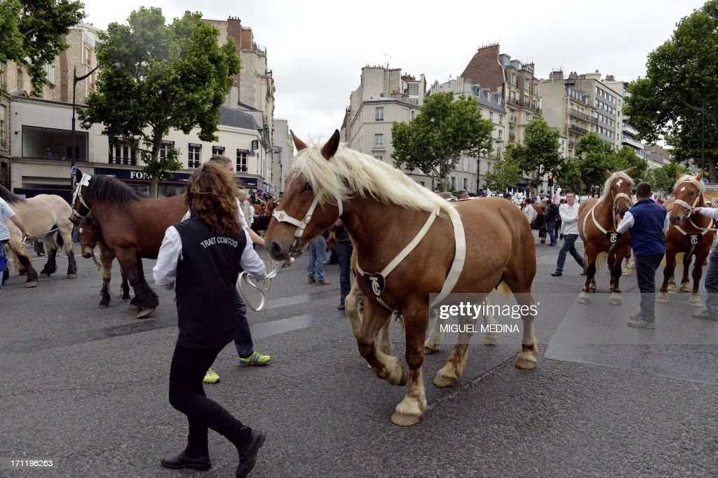 Farmers take part in a rally with their plow Comtois horses in Paris on June 23, 2013. The French agricultural trade union, FNSEA, organized a rally with farmers from all over France and their cattle, to talk about the reality of their work and the difficulties encountered by farmers.
