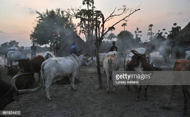 Farmers tend to their cattle in the town of Nimule South Sudan February 2008 After more than five decades of guerilla war and two million lives lost...