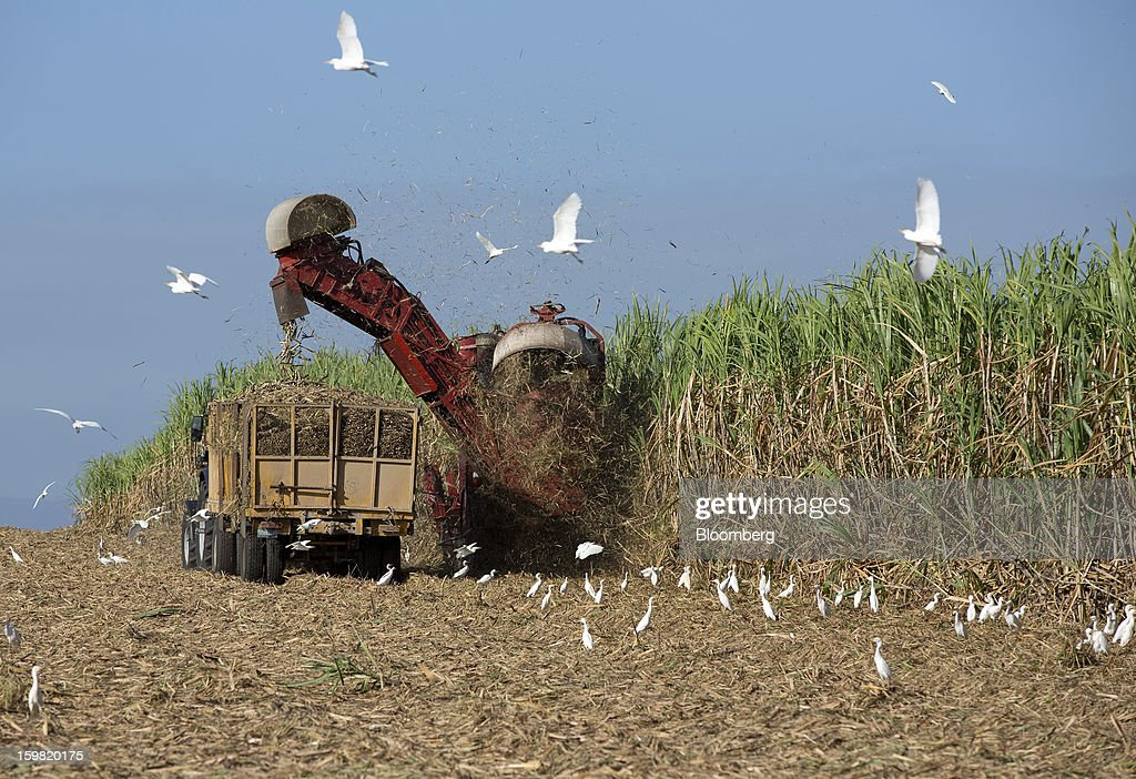 Farmers use a machine to harvest sugarcane in a field near Jatibonico, Cuba, on Sunday, Jan. 13, 2013. Sugar prices fell 16 percent last year as global supplies are forecast to outpace demand for a third year in 2012-13, according to the London-based International Sugar Organization. Photographer: Andrey Rudakov/Bloomberg via Getty Images