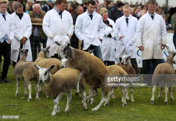 Farmers view their sheep in the show ring during the Royal Highland Show in Edinburgh
