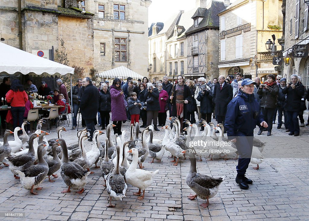 Farmers walk with geese in the streets of the city of Sarlat-la-Caneda on February 17, 2013 during the Fest'Oie festival.