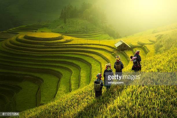 Farmers walking on rice fields terraced