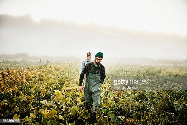 Farmers walking through field of organic squash