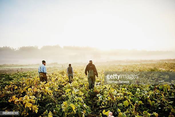 Farmers walking through organic squash field