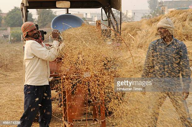 Farmers work in a paddy field as they collect rice stalk from a threshing machine during crop harvesting on November 23 2015 in Noida India India is...
