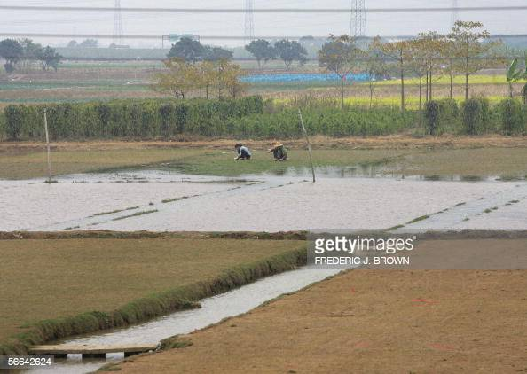 Farmers work their land in Zhongshan city 18 January 2006 in southern China's Guangdong province where encroaching development with a motorway nearby...