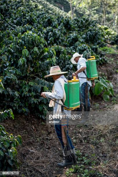 Farmers working at a coffee farm fumigating the crop