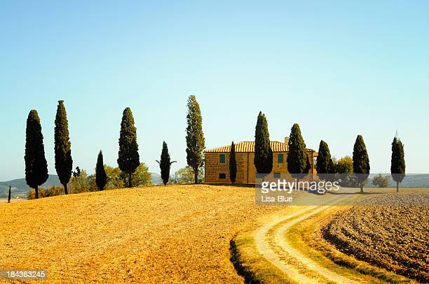 Farmhouse and Cypress Trees