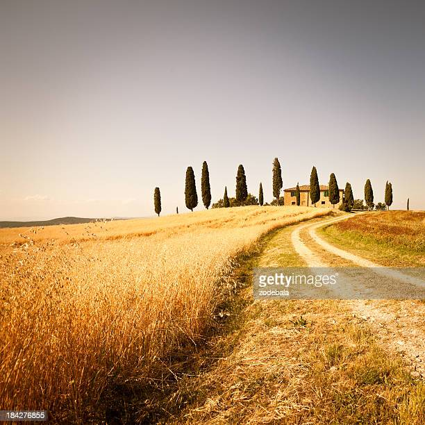 Farmhouse and Rural Road in Val d'Orcia, Tuscany