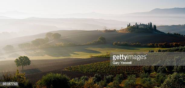 Farmhouse and vineyards in misty landscape