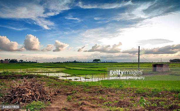 Farming agricultural land