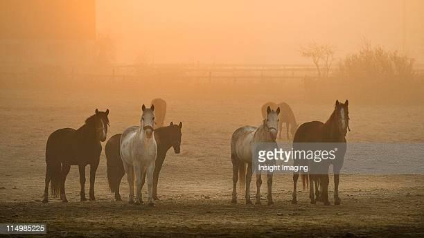 Farming Dawn