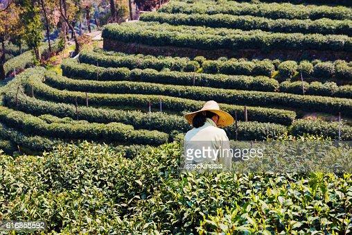 Farming in Longjing : Stock Photo