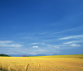 Farmland in Biei-Machi, Hokkaido, Japan