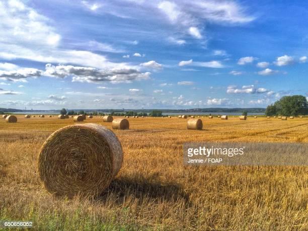 Farmland in norway