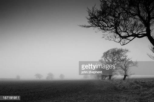 farmland in winter fog